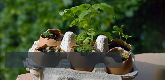 Easy Ways To Start Your Garden