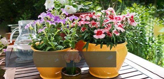 Huge Range Of Pots & Planters